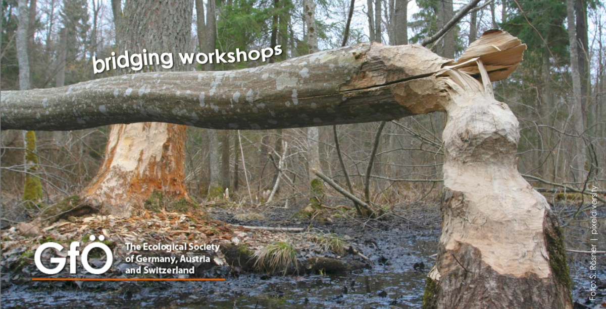 GfÖ bridging workshops